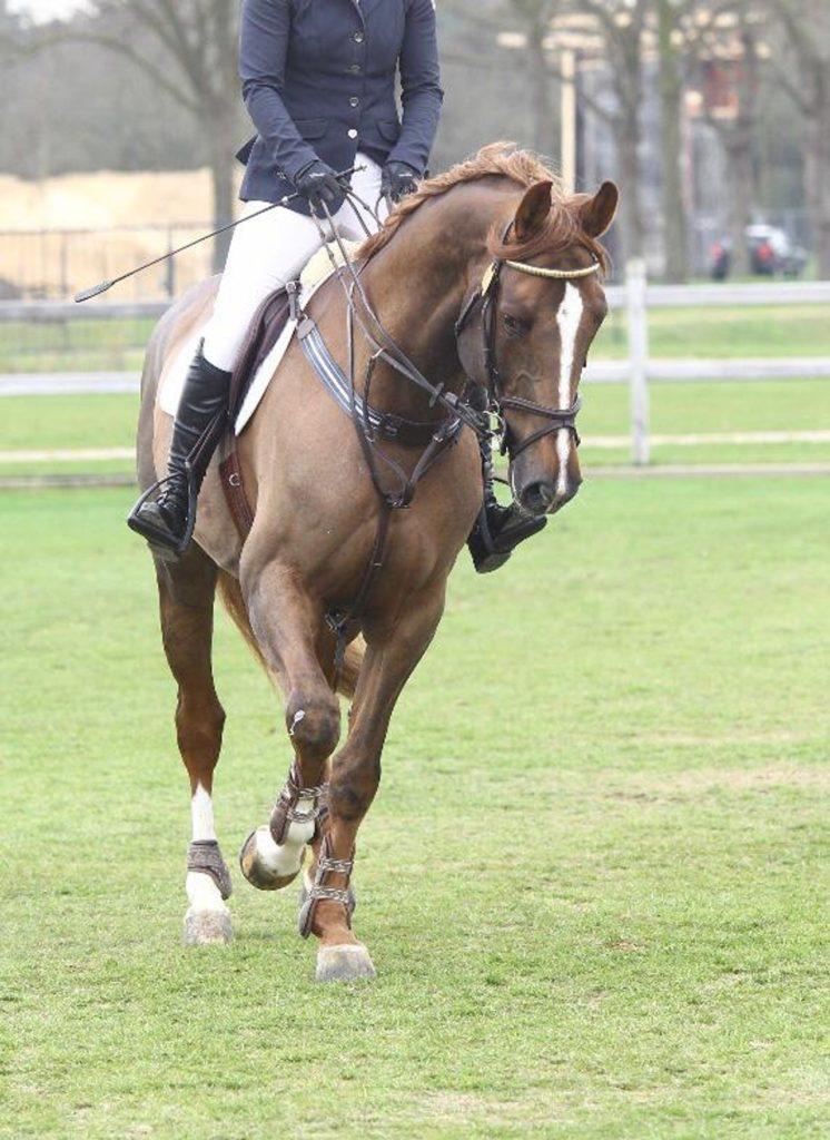 Falsebro Horse Show 2019